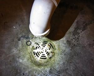 Western Diamond-backed Rattlesnake (Crotalus atrox), 040110, San Antonio, Texas--Utility Room Drain
