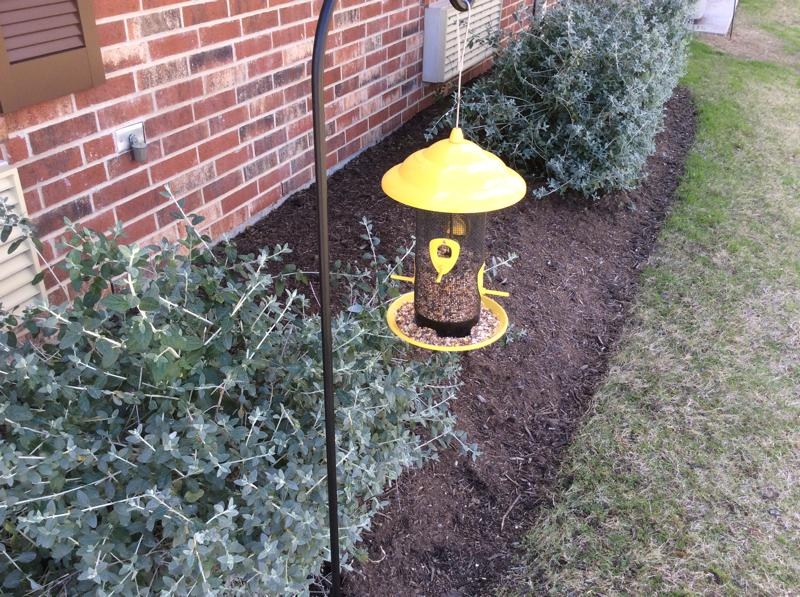 The Truth About Bird Feeders Bugs In The News